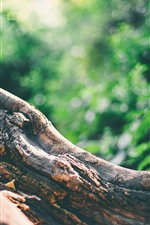 Tree trunk, green background
