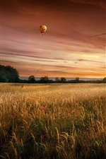 Preview iPhone wallpaper Trees, fields, hot air balloon, sky, dusk