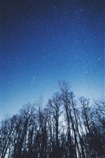 Preview iPhone wallpaper Trees, starry, blue sky