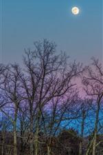 Trees, twigs, moon, night
