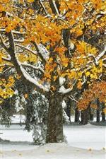 Árvores, folhas amarelas, neve, inverno, parque