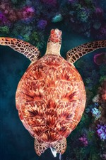 Preview iPhone wallpaper Turtle, underwater, coral reef
