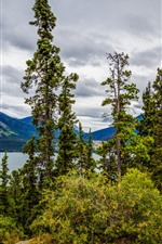 Preview iPhone wallpaper Tutshi Lake, Canada, mountains, lake, trees