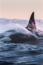 Preview iPhone wallpaper Whale, sea, waves, splash