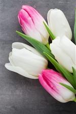 iPhone fondos de pantalla Pétalos de tulipanes blancos y rosas, flores, fondo gris.