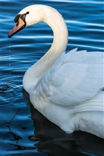 Preview iPhone wallpaper White swan, pond, blue water