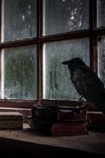 Preview iPhone wallpaper Window, books, bottles, crow, rainy, dirt