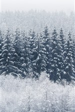 Preview iPhone wallpaper Winter, forest, trees, snow, cold