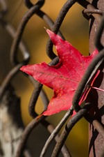 Preview iPhone wallpaper Wire fence, red maple leaf