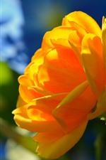iPhone fondos de pantalla Rosa amarilla, sol
