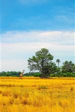Preview iPhone wallpaper Africa, giraffe, trees, yellow grass