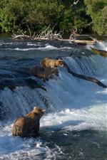 Preview iPhone wallpaper Alaska, Katmai National Park, bears, waterfall