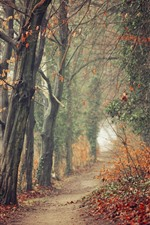 Preview iPhone wallpaper Autumn, trees, path, fog
