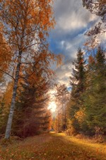 Preview iPhone wallpaper Autumn, trees, path, sky, clouds