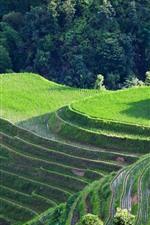 Preview iPhone wallpaper Beautiful Longsheng terrace, trees, green, Guangxi, China