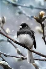 Vogel, Bäume, Zweige, Schnee, Winter