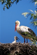 Preview iPhone wallpaper Birds, storks, family