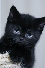 Preview iPhone wallpaper Black kitten, fluffy
