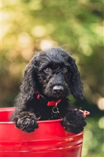 Preview iPhone wallpaper Black puppy, red bucket