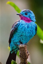 iPhone fondos de pantalla Pájaro azul pluma, hojas verdes