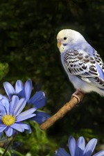 Preview iPhone wallpaper Blue flowers, parrot