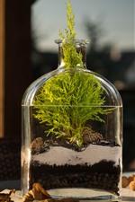 Bottle, plants, water, still life