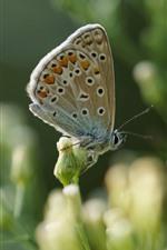 Butterfly, flowers, hazy