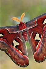 Preview iPhone wallpaper Butterfly, wings, antennae, colorful