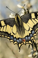 Preview iPhone wallpaper Butterfly, wings, flowers, bokeh