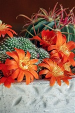 Preview iPhone wallpaper Cactus, orange flowers