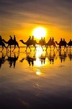Camelo, pessoas, silhueta, lago, pôr do sol