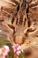 Preview iPhone wallpaper Cat sniff flowers