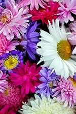 Preview iPhone wallpaper Chrysanthemum, colorful flowers background