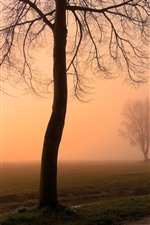 Dawn, trees, fog, house, road, countryside