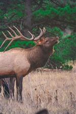 Preview iPhone wallpaper Deer, horn, grass