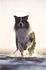 Собака работает, всплеск воды