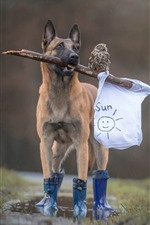 Preview iPhone wallpaper Dog, shoes, owl, funny animals