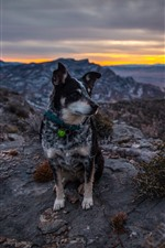 Preview iPhone wallpaper Dog sit on ground, mountains, sunset