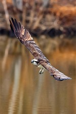 Preview iPhone wallpaper Eagle flight, wings, pond