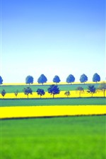 Fields and trees, yellow and green