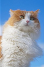 Preview iPhone wallpaper Fluffy cat, blue sky
