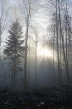 Fog, forest, trees, morning