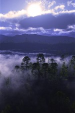 Preview iPhone wallpaper Fog, trees, river, clouds, dawn
