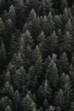 Preview iPhone wallpaper Forest top view, darkness