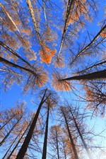 Preview iPhone wallpaper Forest, trees, blue sky, nature scenery