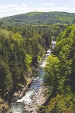 Forest, trees, river, nature landscape
