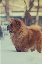 Preview iPhone wallpaper Furry brown dog, winter, snow