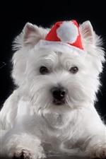 Furry white dog, apple, lamp