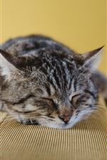 Preview iPhone wallpaper Gray cat sleeping