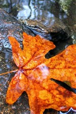 Preview iPhone wallpaper Green and orange foliage, water